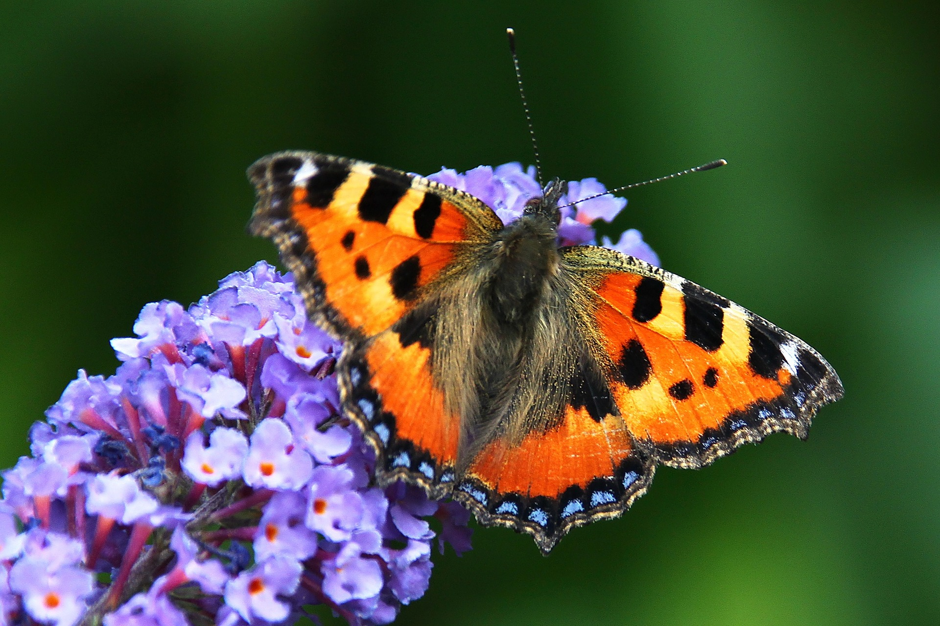 butterfly-1705523_1920-0exif