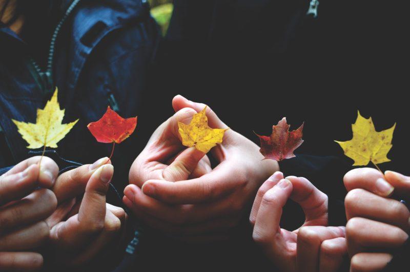 Vielfalt Herbstblätter